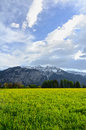 Alps flowers field on mountains Royalty Free Stock Photos