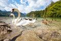 Alps lake with birds Royalty Free Stock Photo