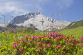 Alpspitze and rhodendron Stock Image
