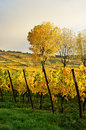 Alsace wineyard typical colorful autumnal scenery in france Stock Images