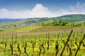 Alsacian Vineyards at Bruche Valley Stock Photo