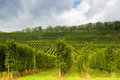Alsatian vineyards and hills Royalty Free Stock Image