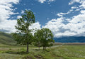 Altai landscape road steppe trees russia and as a foreground blue sky with clouds and mountains as a background Royalty Free Stock Images