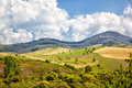 Altai meadows Royalty Free Stock Images