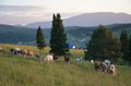 Altai mountains beautiful evening landscape in the Stock Photos