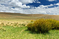 Altai steppe hills clouds the summer landscape russia covered by partially dry grass some plants a bush with yellow flowers as a Royalty Free Stock Photography