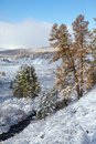 Altai under snow Stock Images