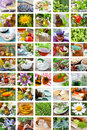 Alternative medicine collage of natural healing Royalty Free Stock Photos