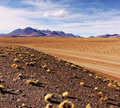 Altiplano bolivian with vegetation and desert Stock Photos