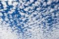 Altocumulus middle-altitude cloud in stratocumuliform - natural background