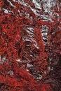 Aluminium foil texture background red color textured aluminum Royalty Free Stock Photos