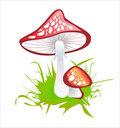 Amanita Royalty Free Stock Photos