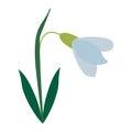 Amaryllis flower decorative icon