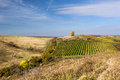 Amazing autumn landscape with vineyards czech republic moravia europe Stock Photos