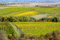 Amazing autumn landscape with vineyards czech republic moravia europe Stock Photography