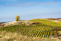 Amazing autumn landscape with vineyards czech republic moravia europe Royalty Free Stock Images