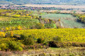 Amazing autumn landscape with vineyards czech republic moravia europe Royalty Free Stock Photos