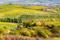 Amazing autumn landscape with vineyards czech republic moravia europe Royalty Free Stock Image
