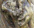 stock image of  Amazing, beautiful fragment of the tree, nice texture. Front light