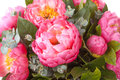 Amazing bouquet of pink pions closeup Stock Images