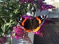 Amazing Butterfly natures beauty Royalty Free Stock Photo