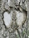 Detailed closeup abstract fragment of view of of sick or damaged tree textured body Royalty Free Stock Photo