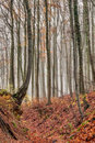 Amazing fall forrest lovely nature picture of an european forest in autumn bavaria germany spooky and creepy atmosphere Stock Images