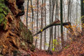 Amazing fall forrest lovely nature picture of an european forest in autumn bavaria germany spooky and creepy atmosphere Stock Image