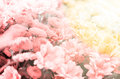 Amazing floral background with sun rays Royalty Free Stock Photo