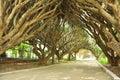 Amazing garden in Alger Royalty Free Stock Photo