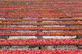 Amazing infinite arrangement surface of red dried tomatoes the sun are left to dry under the hot summer sun puglia region Royalty Free Stock Images