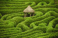 Stock Photos Amazing maze