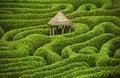 Amazing maze Royalty Free Stock Photo