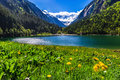 Amazing mountain landscape with lake and meadow flowers in foreground. Stillup lake, Austria Royalty Free Stock Photo