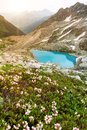 Amazing mountain sunny landscape with blue lake and pink rhododendron flowers Royalty Free Stock Photo