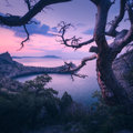 Amazing old tree in crimean mountains at sunrise Royalty Free Stock Photo