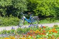 Blue bicycle on park`s lane surrounded by blooming flowers Royalty Free Stock Photo