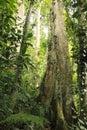 Cloudy rainforest high jungle Henri Pittier National Park Venezuela but Royalty Free Stock Photo