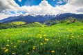 Amazing spring landscape with field of yellow dandelion flowers Royalty Free Stock Photo