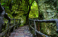 Amazing stone staircase fence tree scene at mekong delta rocky mountain old with rock with large trunk abstrack roof and big Royalty Free Stock Image