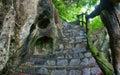 Amazing stone staircase, fence, tree Royalty Free Stock Photo