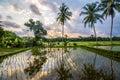 Amazing sunrise at bali Rice field, indonesia Royalty Free Stock Photo