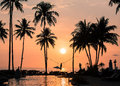 Exotic sunset beach background with palm trees