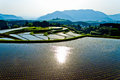 Amazing terraced rice fields in Japan Kyushu Royalty Free Stock Photo