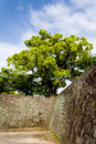 Amazing tree on top of Japanese Zen castle walls Royalty Free Stock Photography