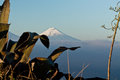 Amazing view of Cotopaxi volcano, Ecuador Royalty Free Stock Photo