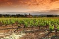 Amazing Vineyard Sunset Stock Photography