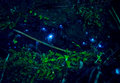 Amazing Waitomo Glow Worm In C...