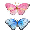 Amazing watercolor butterfly