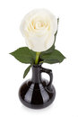 Amazing white rose in black vase isolated on background Royalty Free Stock Image